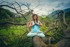 Young woman practice yoga outdoor on huge fell tree on the mount Royalty Free Stock Photography