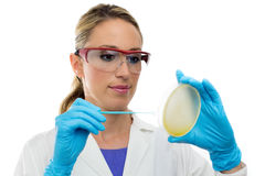 Young woman preparing a petri dish Stock Photo