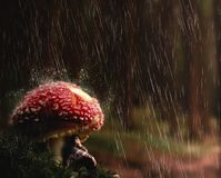Young woman protect herself from rain under a mushroom..