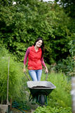 A young woman pushing a wheelbarrow on an allotment Stock Photography