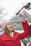 Young woman reaching for a branch in the snow Royalty Free Stock Images