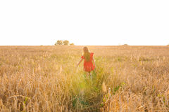 Young woman in red dress walking on summer field at sunny day, rear view.Concept of happiness and carefree Royalty Free Stock Photography