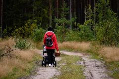 Young woman in red jacket enjoying nature in forest. Latvia Royalty Free Stock Photos