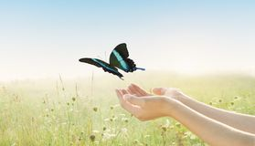 Young woman releasing beautiful swallowtail butterfly over flower field Stock Image