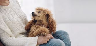 Young woman is resting with a dog on the armchair at home . Royalty Free Stock Photo