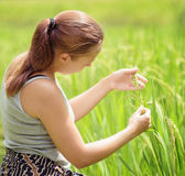 Young woman in rice field Royalty Free Stock Photography