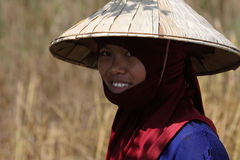 Young woman in the rice fields Stock Photography
