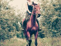 Young woman ridding on a horse. Animal, horsemanship concept. Young woman ridding on a horse through garden on sunny spring day royalty free stock photo