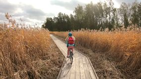 Young woman ride bicycles on a wooden ecological trail among the reeds stock footage