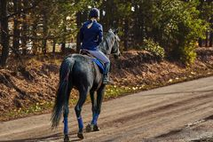 A young woman rider in a blue and white costume on a black horse is preparing to participate in equestrian competitions.  royalty free stock photo