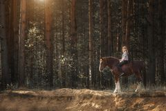 Young woman rider with her horse in evening sunset light at the forest stock photo