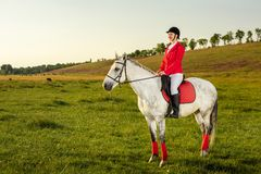Young woman rider, wearing red redingote and white breeches, with her horse in evening sunset light. Outdoor photography in lifestyle mood royalty free stock images