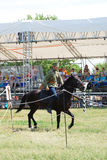 A young woman rides a horse. Horse riders competition Royalty Free Stock Photography