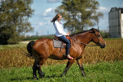 Young woman riding on a brown horse. In a field in summer Royalty Free Stock Image
