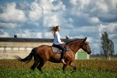 Young woman riding on a brown horse. In a field in summer Stock Images