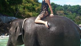 Young woman riding on the elephant in the sea stock video footage