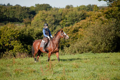 Young woman riding a horse in open field. Young woman riding a horse across open field UK with woodland in the background royalty free stock images