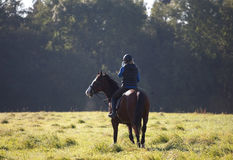 Young woman riding a horse in open field. Young woman riding a horse across open field UK with woodland in the background. Pausing to use mobile phone royalty free stock photo