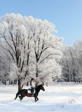 Young woman riding horse on a winter meadow Royalty Free Stock Photos