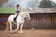 Young woman riding shire horse Stock Images