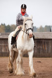 Young woman riding shire horse i. N arena Royalty Free Stock Photography