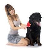 Young woman and rottweiler Royalty Free Stock Image