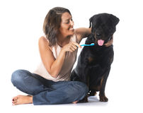 Young woman and rottweiler Stock Photos