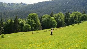 Young woman running down a green mountain meadow. Clear summer day. Forest and mountains in the distance.  Slow motion.  stock video footage