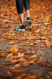 Young woman running in the early evening autumn leaves Stock Photos