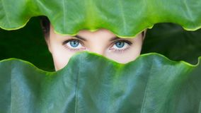 Young woman`s face surrounded by tropical leaves. Stock Photo