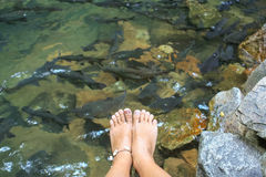 Young woman's feet Royalty Free Stock Photos