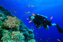 Young Woman Scuba Diver. Watches tropical fish Royalty Free Stock Photos