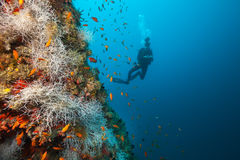 Young woman scuba diver exploring coral reef Stock Image