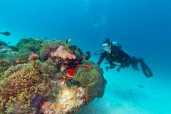 Young woman scuba diver exploring coral reef. Underwater activities Stock Photo