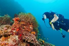 Young woman scuba diver exploring coral reef. Underwater activities Royalty Free Stock Photos