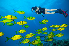 Young woman scuba diver exploring sea bottom Royalty Free Stock Image
