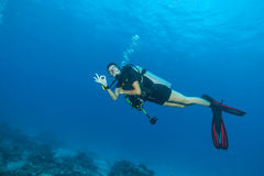 Young woman scuba diver showing ok sign. Young woman scuba diver exploring sea bottom. Showing ok sign. Underwater life with beautiful rocks and coral Stock Image