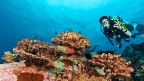 Young woman scuba diver showing ok sign. Young woman scuba diver exploring sea bottom. Showing ok sign. Underwater life with beautiful rocks and coral Stock Photography