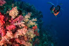 Young woman scuba diving on a beautiful soft coral reef in South. Andaman, Thailand royalty free stock images