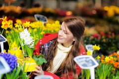 Young woman selecting fresh flowers Stock Images