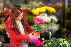 Young woman selecting fresh flowers Royalty Free Stock Photography