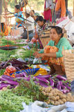 Young woman selling fresh vegetables Stock Photography
