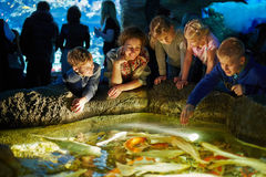 Young woman and several children see after fishes. Young women and several children see after fishes in enlighted pool at oceanarium royalty free stock images