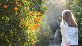 Young woman shaking orange fruit branches. In the garden in slow motion stock video