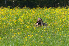 Young woman shoots among yellow flowers at meadow Stock Photo