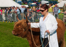 Young woman showing cattle Stock Photo