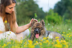 Young Woman Sits With An Elo Puppy In The Grass Royalty Free Stock Images