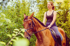 Young woman sitting on a horse Stock Images