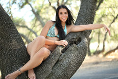Young woman sitting in oak tree blue bikini Royalty Free Stock Photography