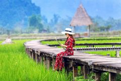 Young woman sitting on wooden path with green rice field in Vang Vieng, Laos.  Royalty Free Stock Photography